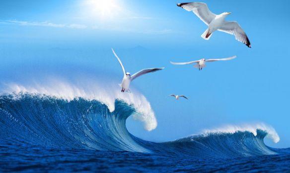 freedom sky sea